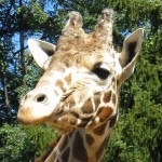 Discounted Admission to Plumpton Park Zoo in Cecil County
