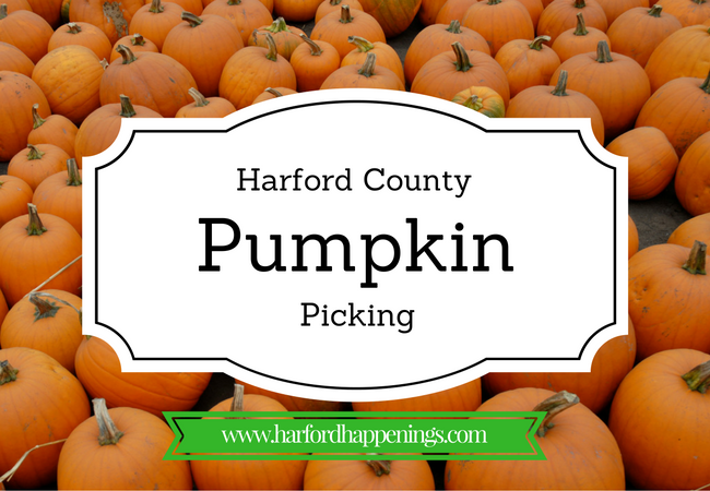 Pumpkin-Picking