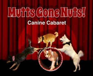 Discounted Tickets Available for Mutts Gone Nuts: Canine Cabaret at Harford Community College
