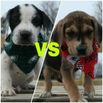 PAWS Dog Rescue in Forest Hill to Hold Puppy Bowl Fundraiser on Feb. 3rd