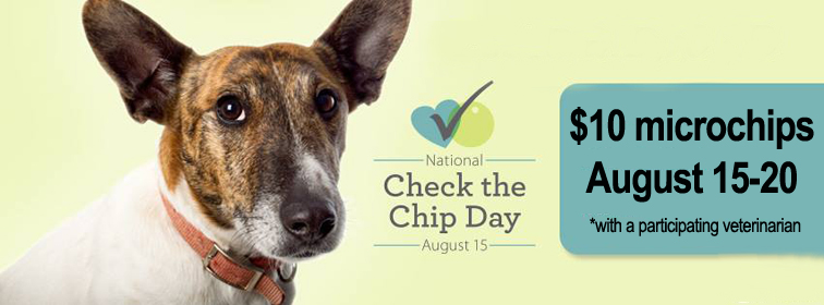 Get Your Pet Microchipped at a Local Vet Clinic For Only $10 This Week!